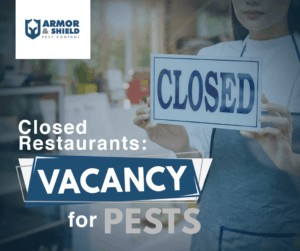 Missing sanitation steps from restaurants and offices contribute to the rapid increase in numbers of pests